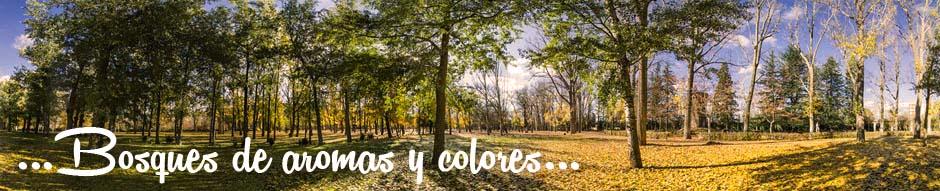 Los paisajes de Soria están llenos de colores y contrastes